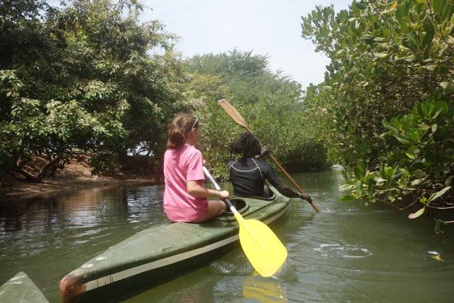 Le Sine Saloum, cette vaste et belle région de mangrove : Tourisme, zone, hôtel, île, pirogue, mangrove, culture, visite, voyage, vacance, fleuve, côte, sine, saloum, LEUKSENEGAL, Dakar, Sénégal, Afrique
