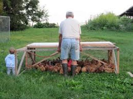 Consultoria experta en negocios de agricultura ganaderia y forestales como se produce un huevo - Casas para gallinas ...