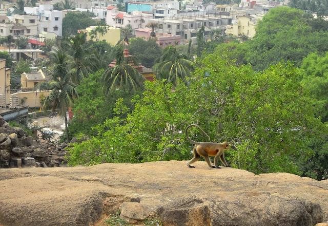 Monkey, Udayagiri caves, Bhubaneshwar