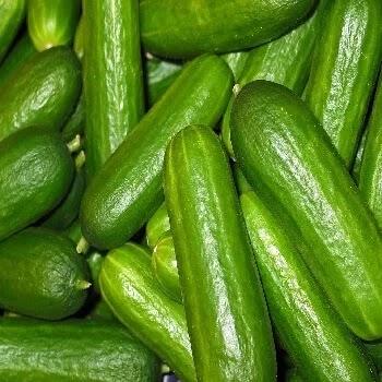 काकडी, cucumber vegetables name in Marathi