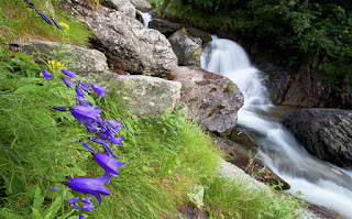 Waterfalls and bluebells- Mircea Costina