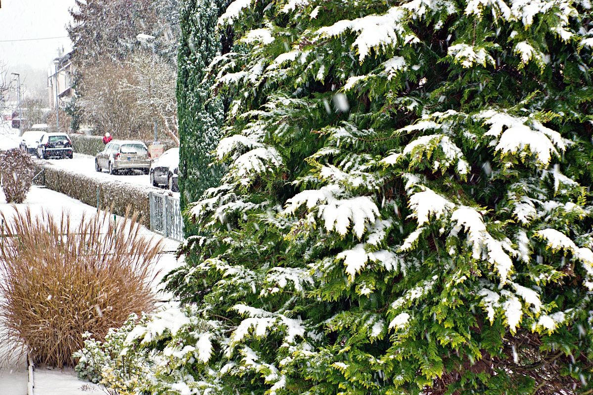 #251 Domiplan f2.8 50mm - Als es noch im Winter Schnee gab
