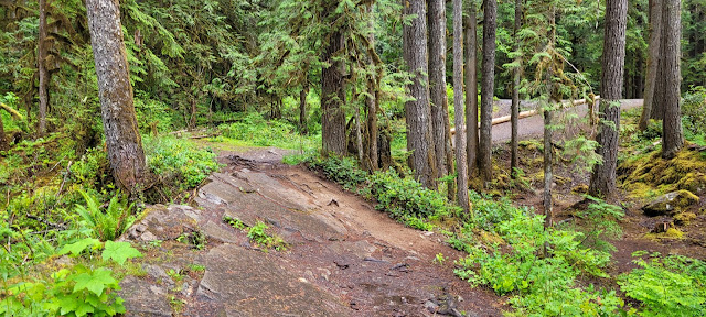 A short trail to viewing area at Nooksack Falls
