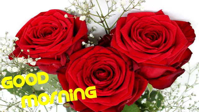 Good morning image rose flowers