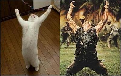 Witzige Katzenbilder Vergleich - Pfoten hoch