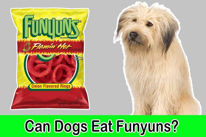[2021] Can Dogs Eat Funyuns | Can Dogs Have Funyuns Safely