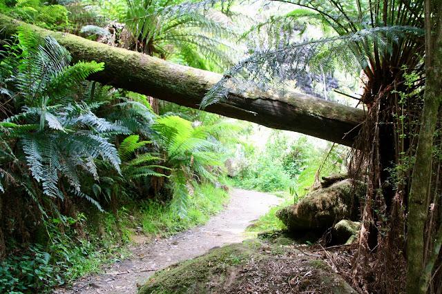 forest walking track under fallen tree