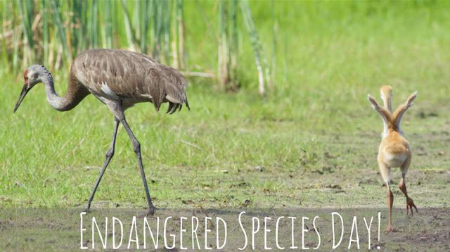 National Endangered Species Day Wishes Photos