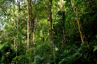 Forest along the edge of Rio Viejo in Puriscal.