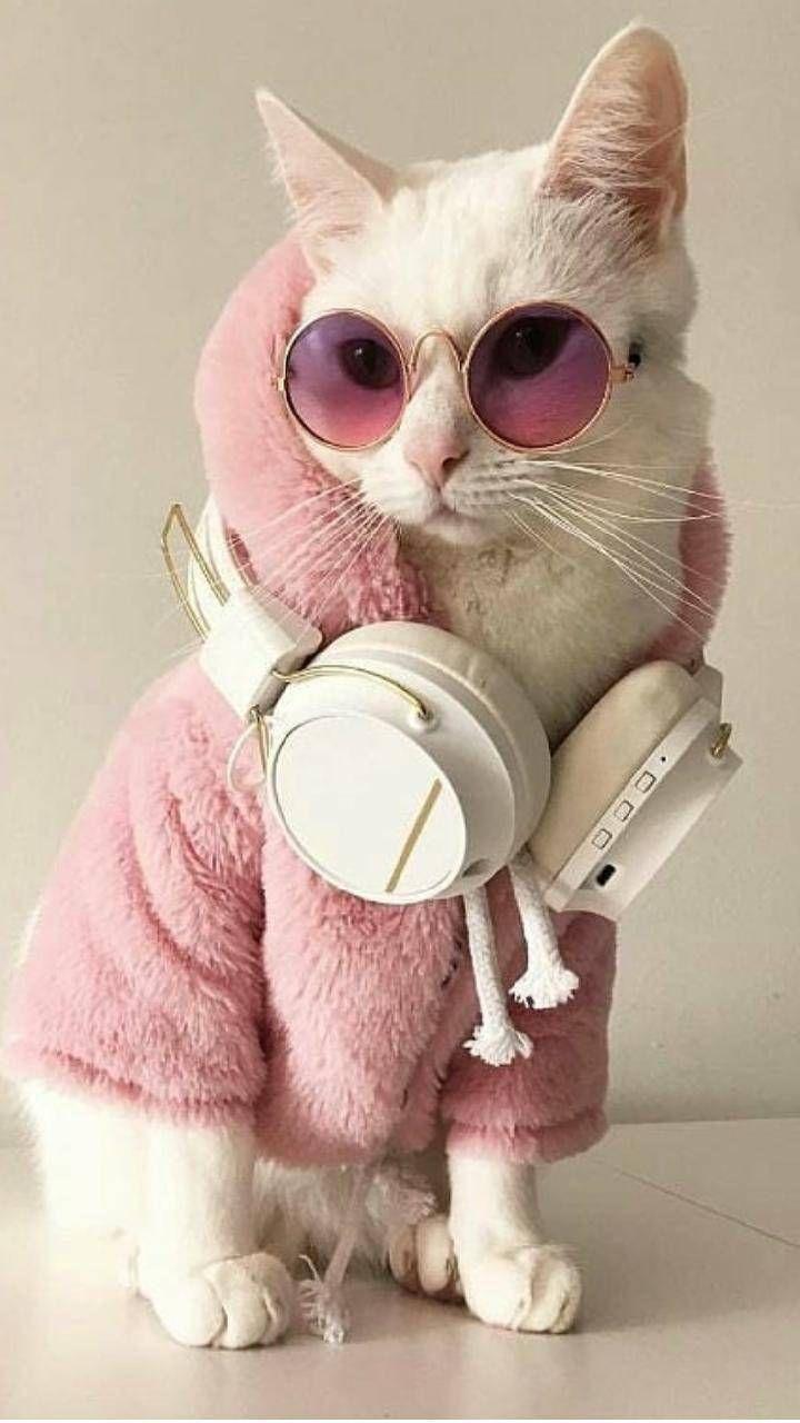 Wallpaper Kucing Lucu Untuk Kamu Koleksi Sekarang Juga Anidraw