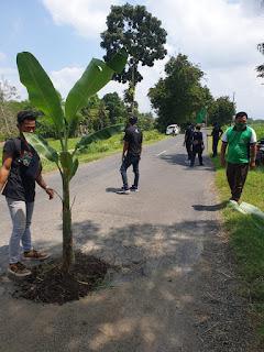 PC GP Ansor Kencong Gelar Aksi Tanam Pohon Pisang di Jalan
