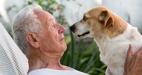 A háziállatok segíthetnek az idősebb embereknek az egészségi problémákban