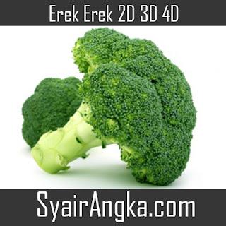 Erek Erek Brokoli 2D 3D 4D