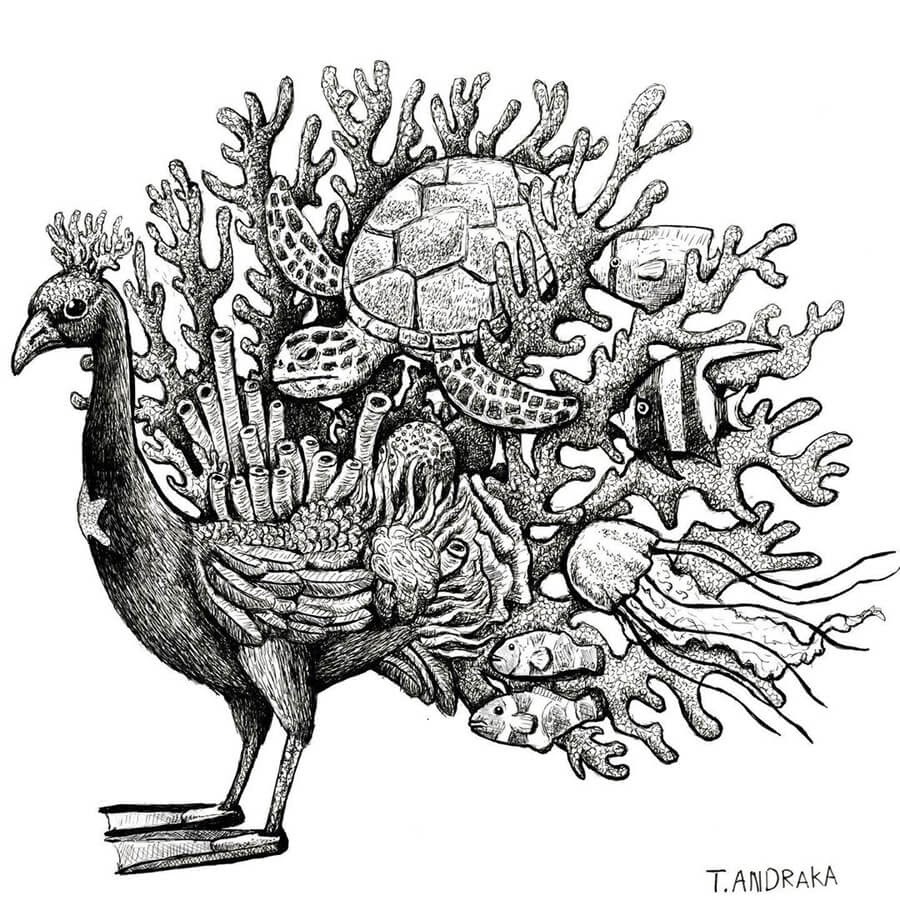 10-Marine-Peacock-Tim-Andraka-www-designstack-co