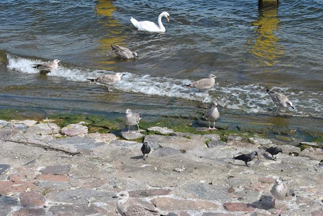 ptaki nad morzem morze bałtyckie i ptaki piasek