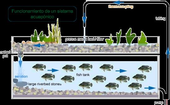 permacultura autosuficiencia y tecnolog a hidroponia y