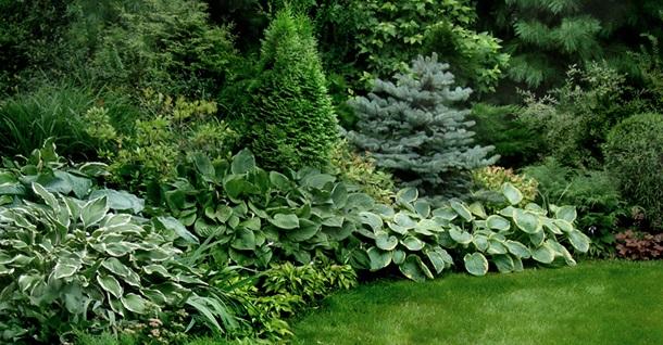 Зелёный цветник вокруг газона