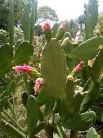 Imagen sin edicion cactus