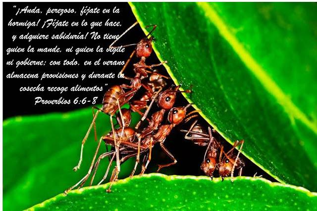 ejemplo-hormiga