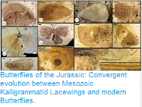 http://sciencythoughts.blogspot.co.uk/2016/02/butterflies-of-jurassic-convergent.html