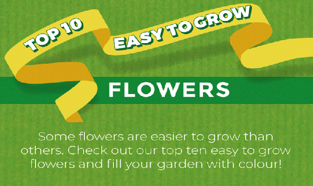 Top 10 Easy To Grow Flowers #infographic