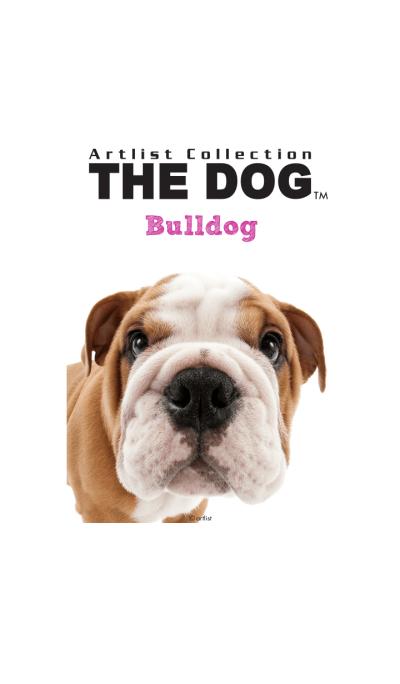 THE DOG Bulldog