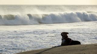 Nicaragua dog at beach