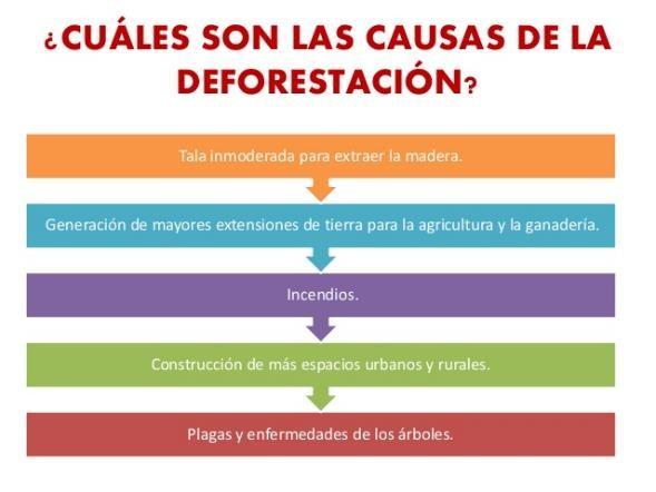 causas deforestacion