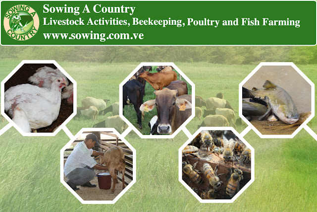 Livestock Activities, Beekeeping, Poultry and Fish Farming