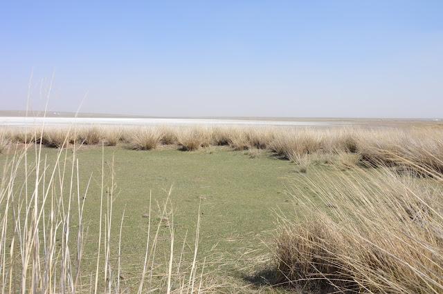 Les prairies de Xilamuren en Mongolie intérieure