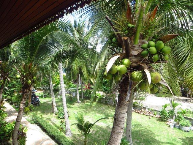 Кокосовые орехи видно с балкона