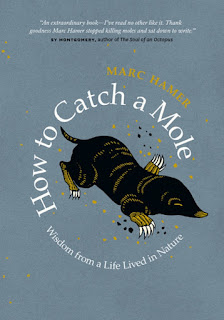 Review of How to Catch a Mole by Marc Hamer