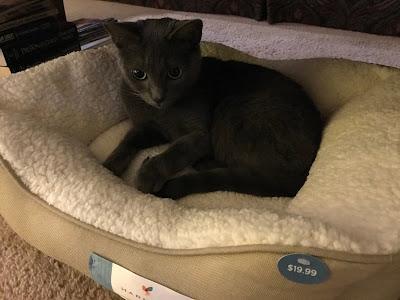 Zoë in her new bed