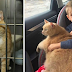She asked her son to adopt any pet from the shelter, so he chose the big, old Marmalade cat