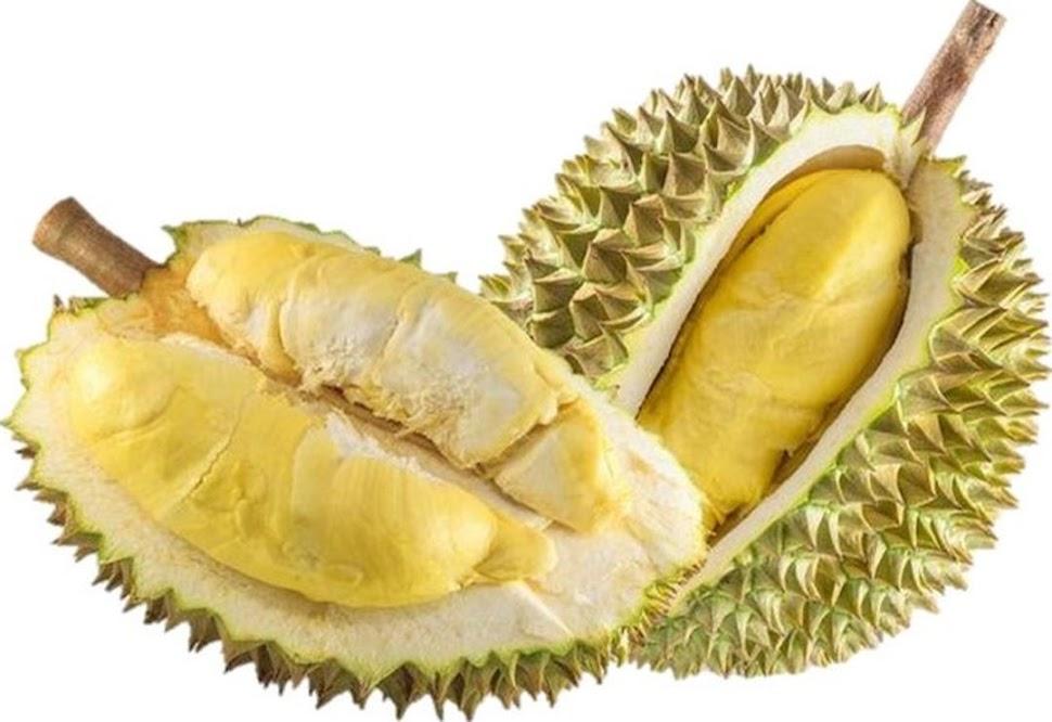 Bibit Tanaman Buah Durian Bawor Unggul varietas dijamin asli dan bergaransi Jakarta
