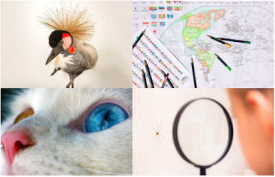 collage of photos from NatGeo website cat feather child
