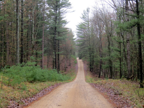 Forest Road 8180