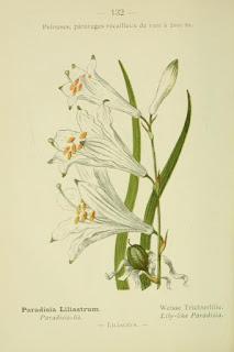 Free download Botanical illustration Books
