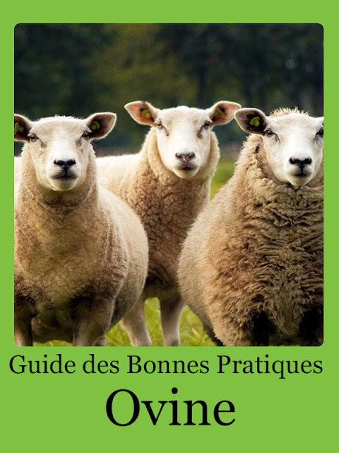 Guide des Bonnes Pratiques Ovines - WWW.VETBOOKSTORE.COM