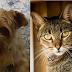 Recomendaciones sobre el cuidado de las mascotas durante el coronavirus