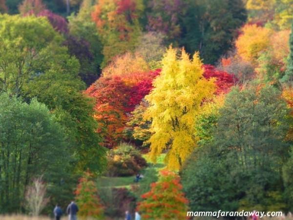 boschi foliage inglesi