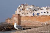 http://www.diariosdeunfotografodeviajes.com/2015/10/esauira-la-ibiza-marroqui.html