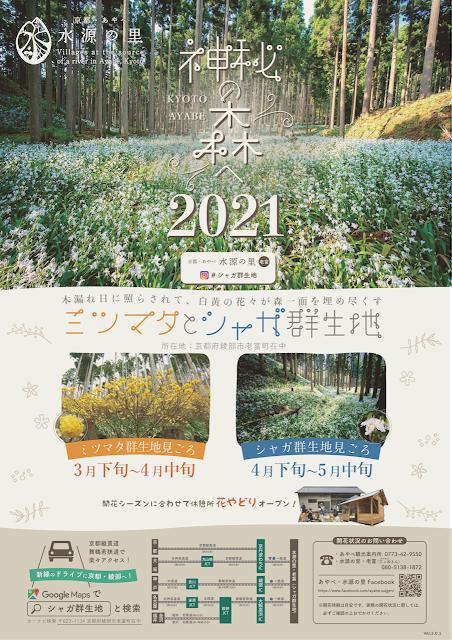 神秘の森2021オモテ
