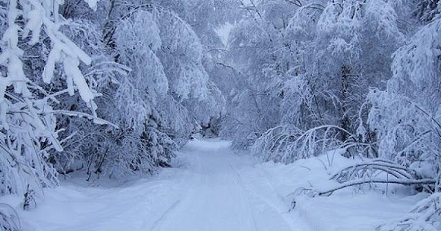 Winter in bird valley