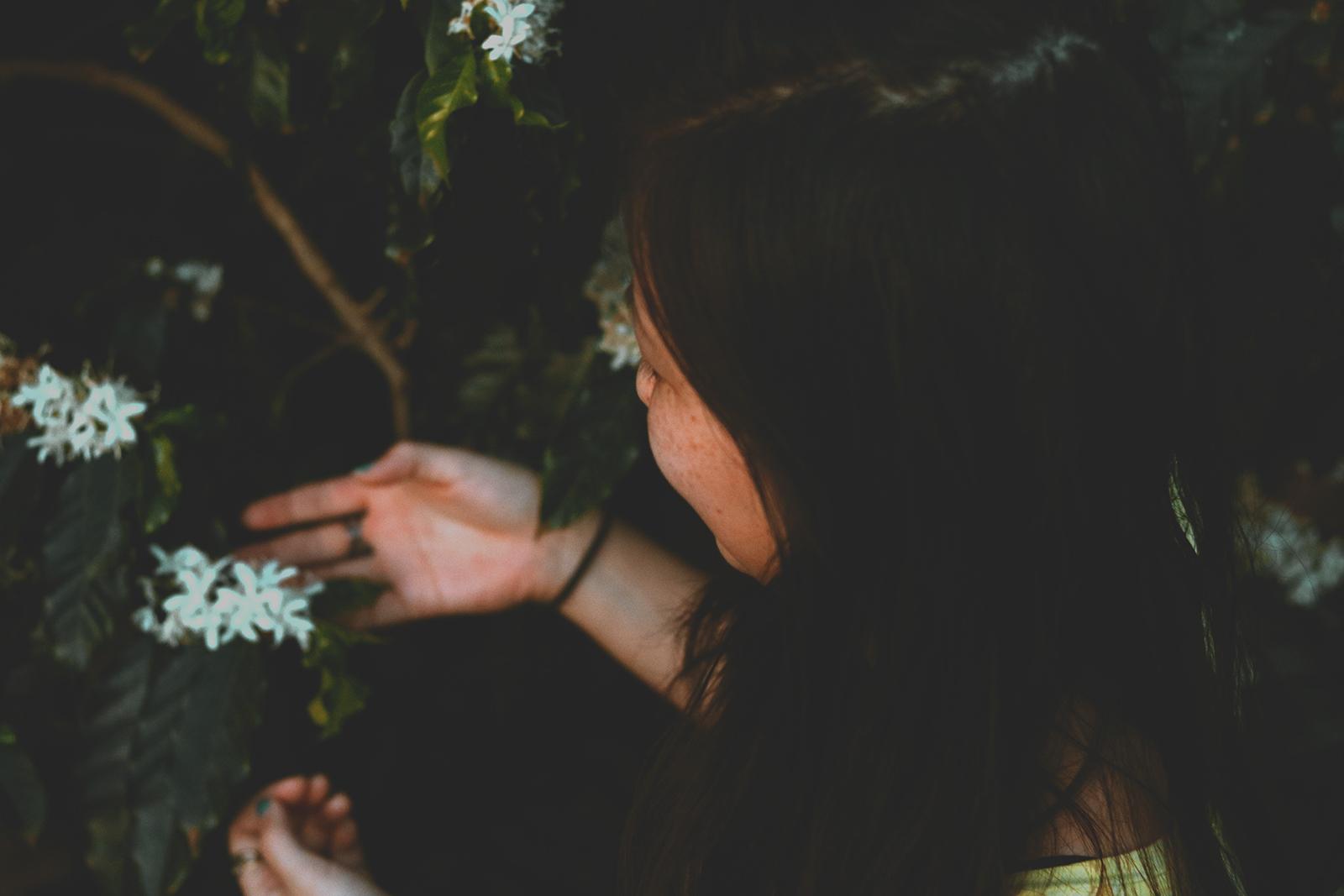 flores brancas no cafezal