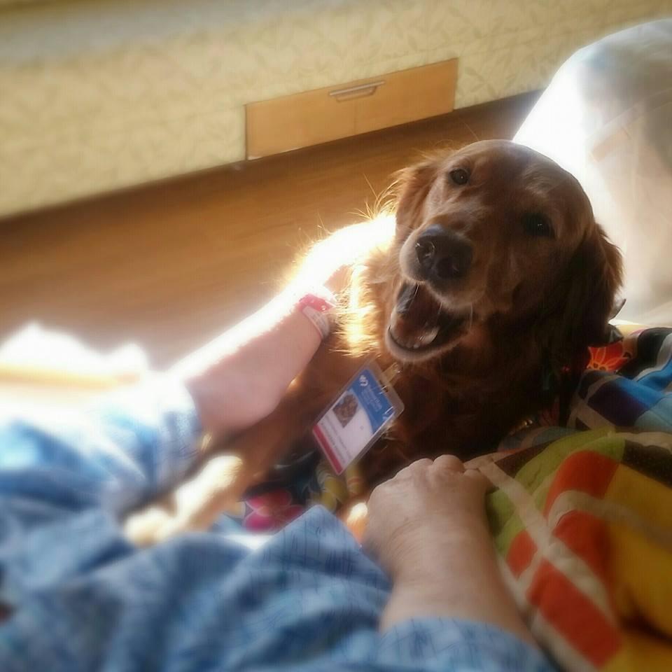 Huffington Post Dog Video
