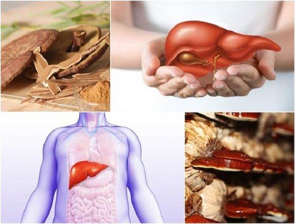 Bảo vệ gan khỏe mạnh nhờ nấm linh chi