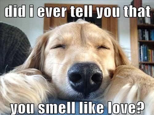 Cute Love Memes 4