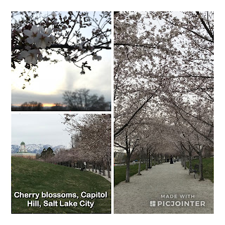 Cherry Blossom Festival at Capitol Hill, Salt Lake City
