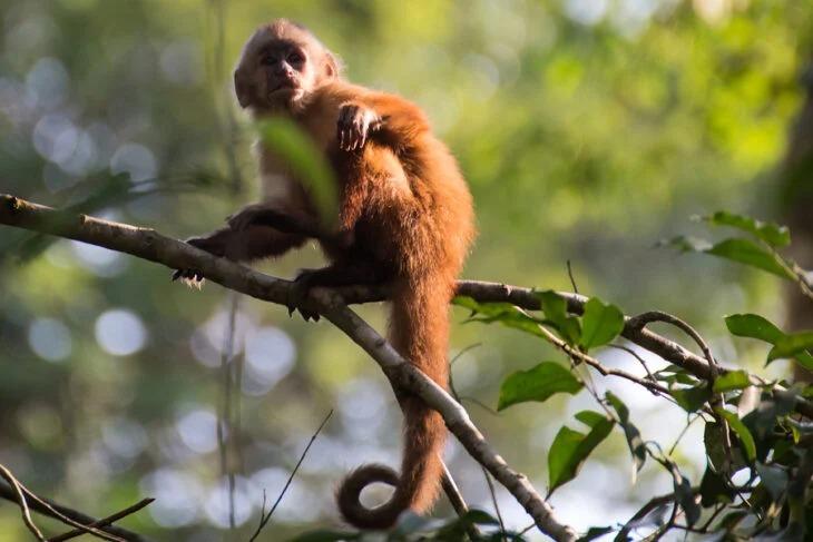 Detectan caso de viruela de mono en Estados Unidos